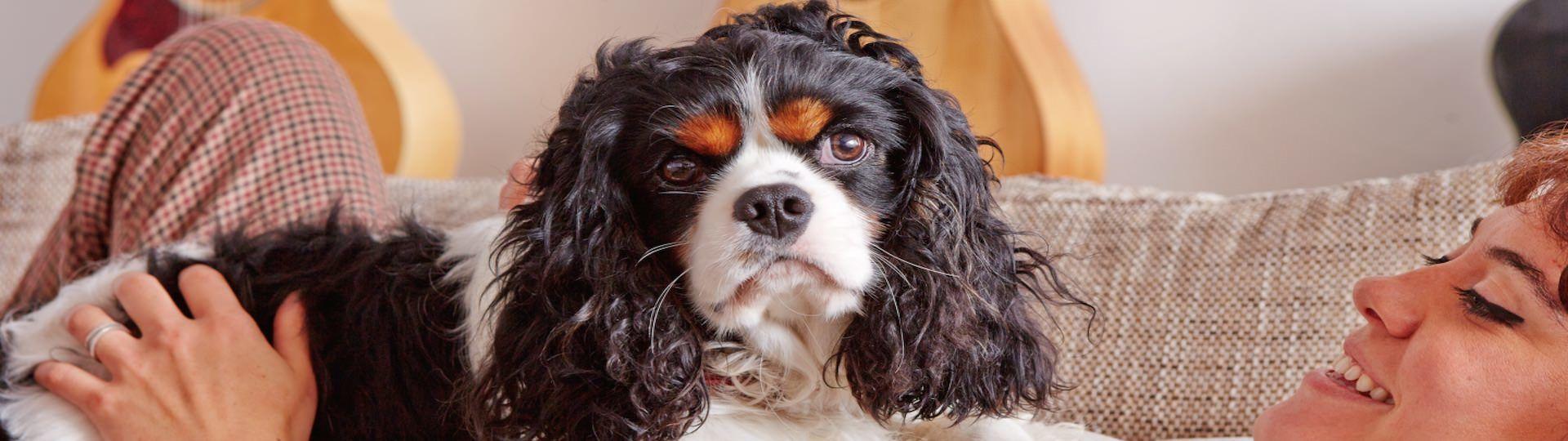 ajuda os cães na aprendizagem, a acalmar, nas viagens...