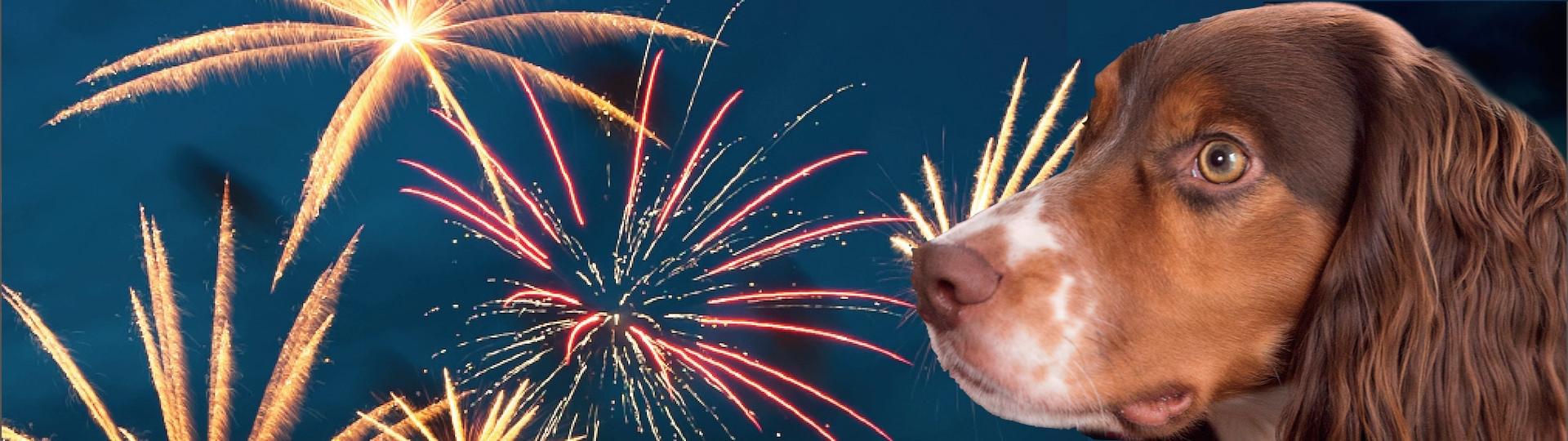 Fear of Fireworks in Dogs