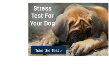 Stress Test Your Dog